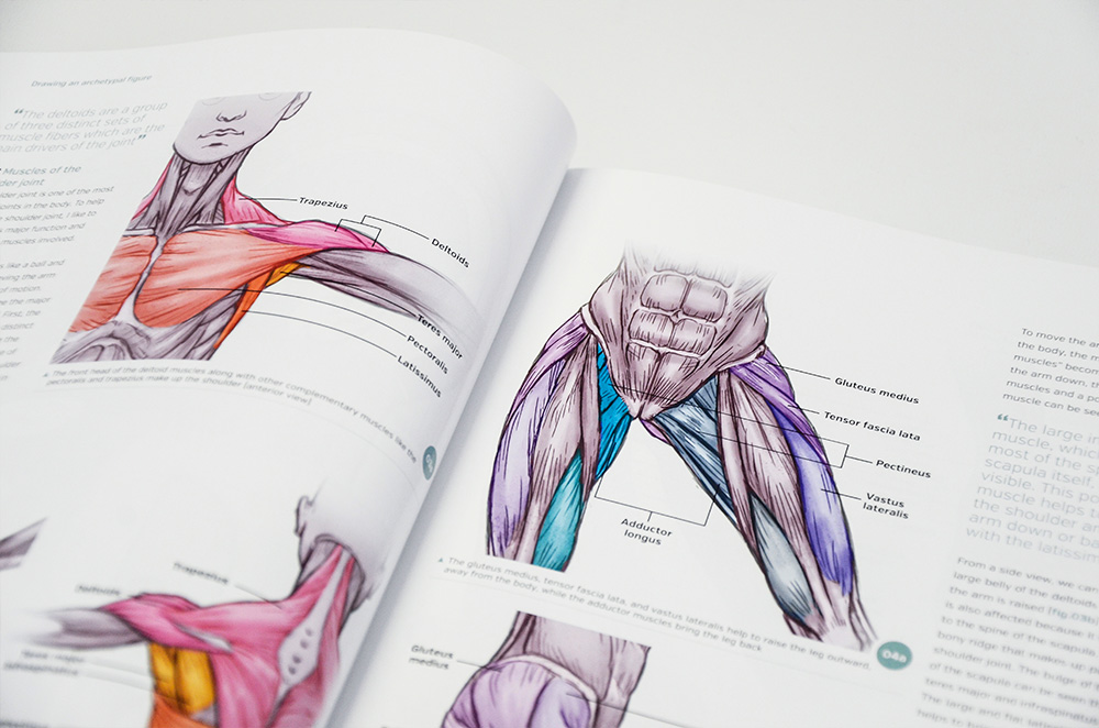 Anatomy For 3d Artists 3dtotal Publishing